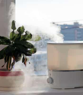 Какой увлажнитель воздуха лучше: паровой или ультразвуковой?